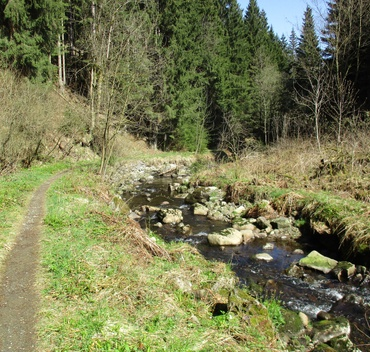 Trail im Radautal  (Copyright: Maurice Schwamberger)