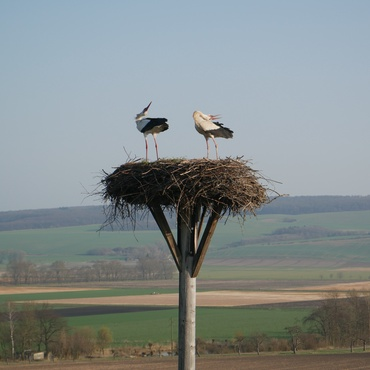 Storchennest in Hedeper (Bildrechte: Ralf Isensee)